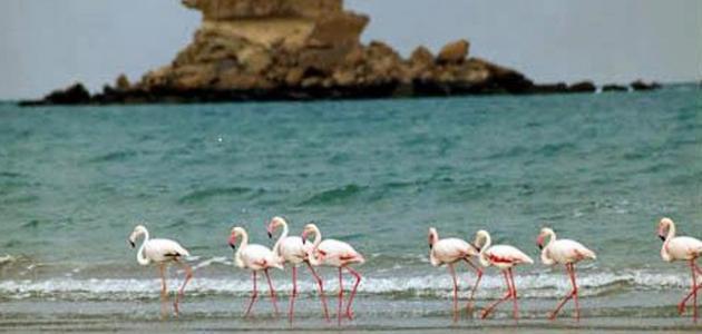جزيرة قشم في إيران