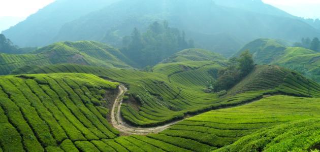 دولة ماليزيا السياحية