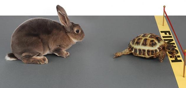 قصة الأرنب والسلحفاة