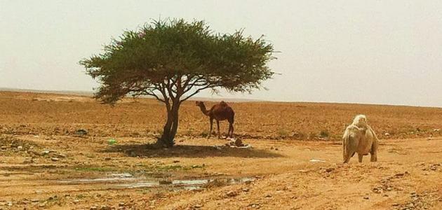 الخصائص الطبيعية للبيئة الصحراوية