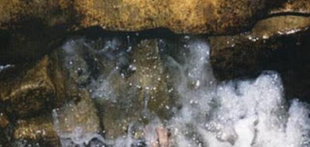 عجائب ماء زمزم