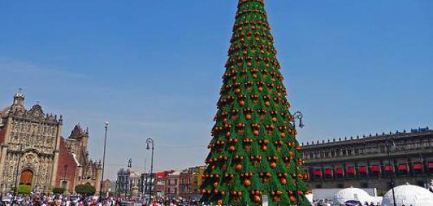أكبر شجرة عيد ميلاد في العالم