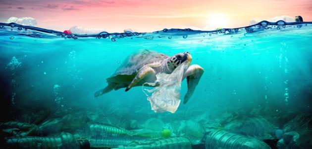 نتائج تلوث الماء - موضوع
