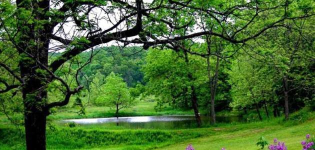 موضوع عن الشجرة وفوائدها