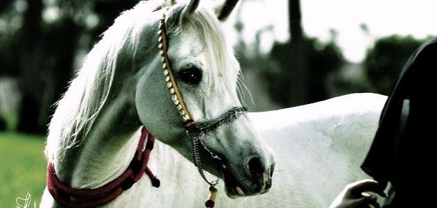 الفرق بين الحصان والفرس