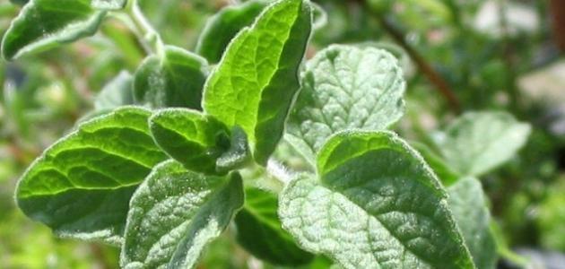 وصفات بالأعشاب لإنقاص الوزن