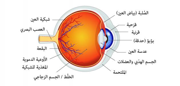 أجزاء العين ووظائفها