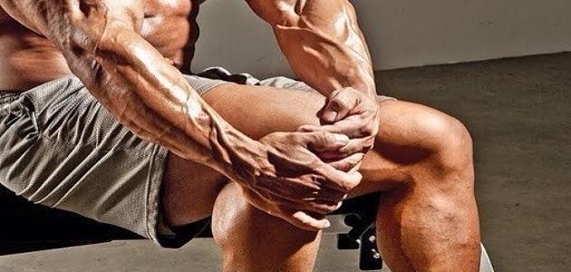 مكونات الجهاز العضلي