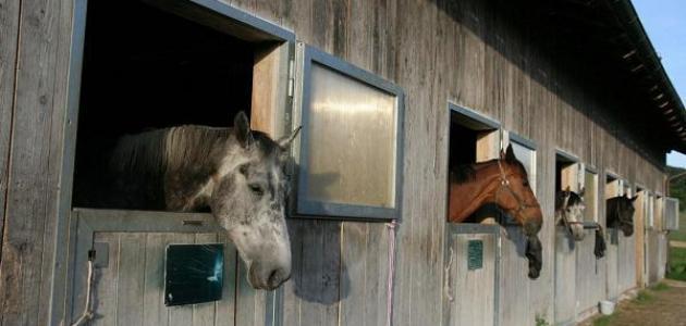 الثلاثاء صدفة نشيط ما اسم انثى الحصان Findlocal Drivewayrepair Com