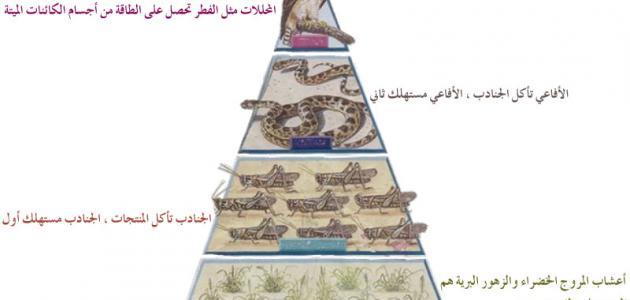 مكونات الوسط البيئي