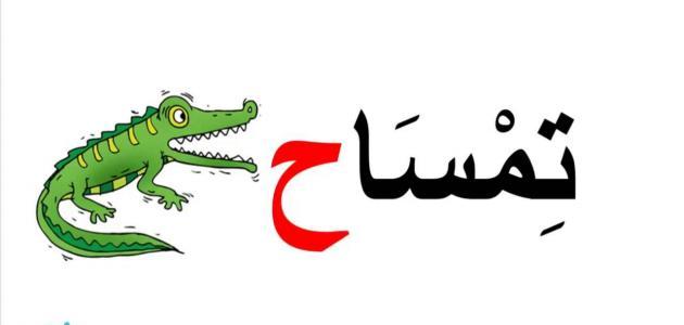 تعليم اللغة العربية للصف الأول الابتدائي