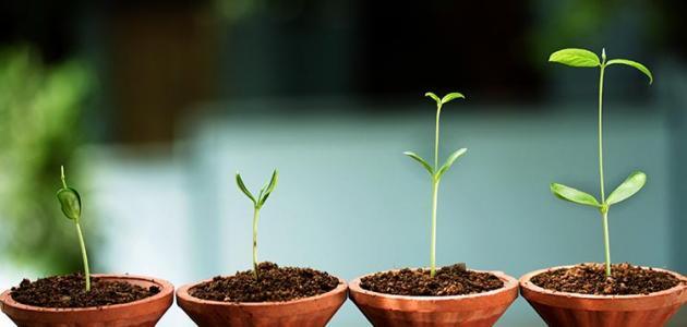 تعريف النمو