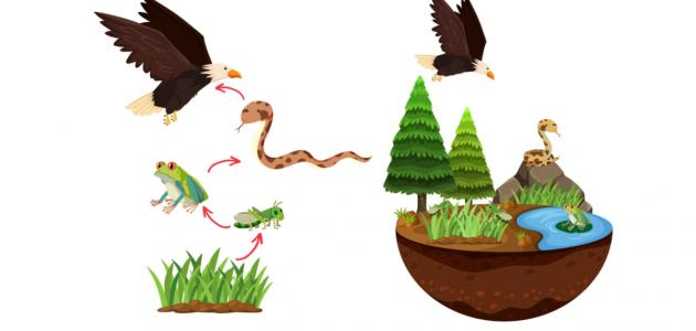 عناصر الوسط البيئي والسلسلة الغذائية