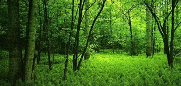 حماية الغابة