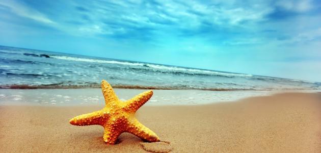 مقال وصفي عن البحر