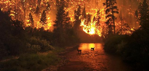 وسائل السلامة من الحرائق