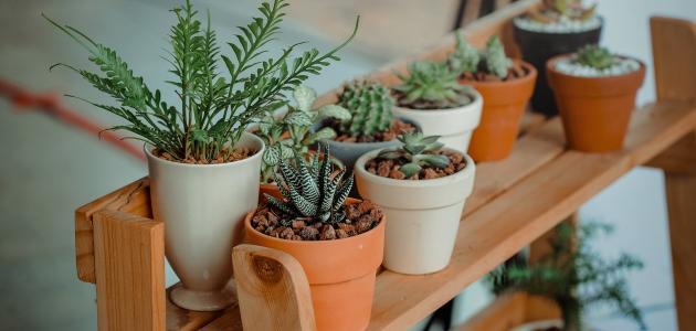 عالم النباتات المنزلية