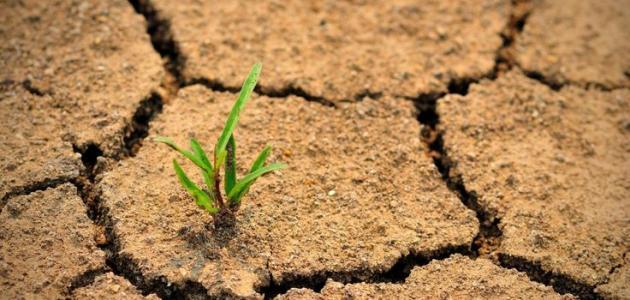 ظاهرة التصحر في العالم العربي