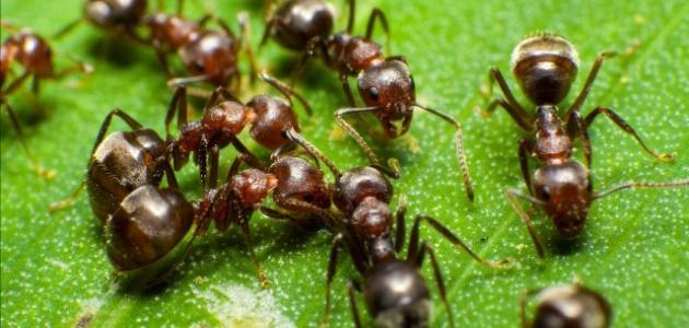 كيف أطرد النمل من بيتي