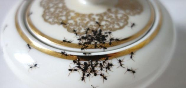 كيف تتخلص من نمل المنازل