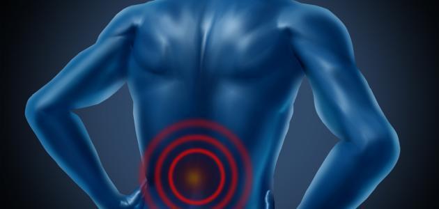 كيف ترتبط العضلات بالعظام - موضوع