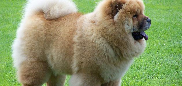 أنواع كلاب العالم