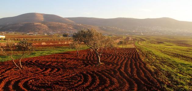 ما هي أهم سهول فلسطين