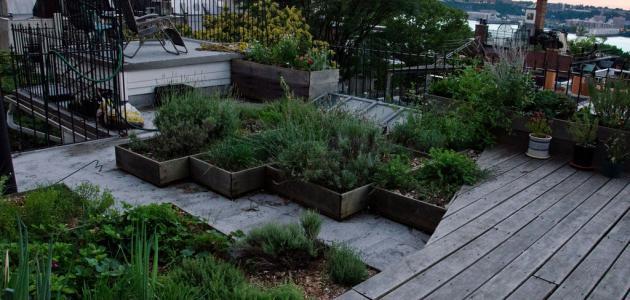 كيفية زراعة سطح المنزل