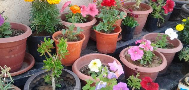 كيفية زراعة نباتات الظل