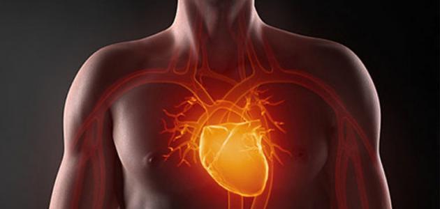 ما فوائد القلب