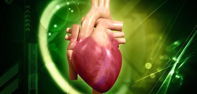 كيفية عمل قلب الإنسان