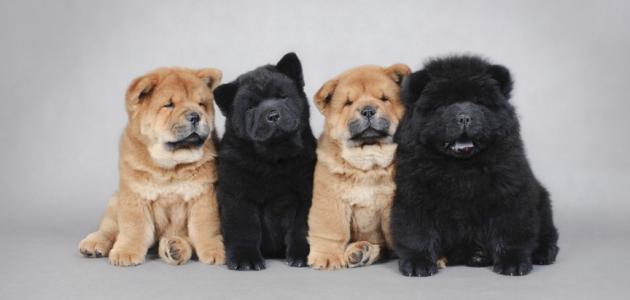 أنواع الكلاب وأسماؤها