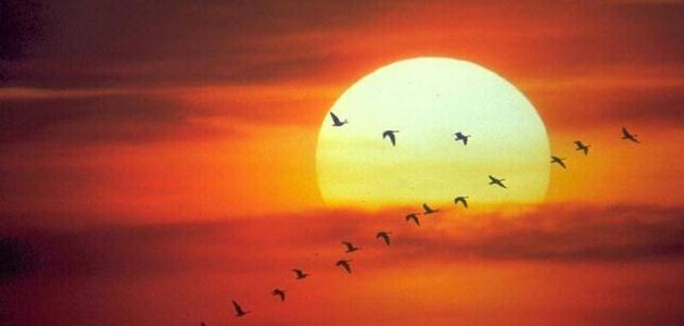 تعبير عن الشمس