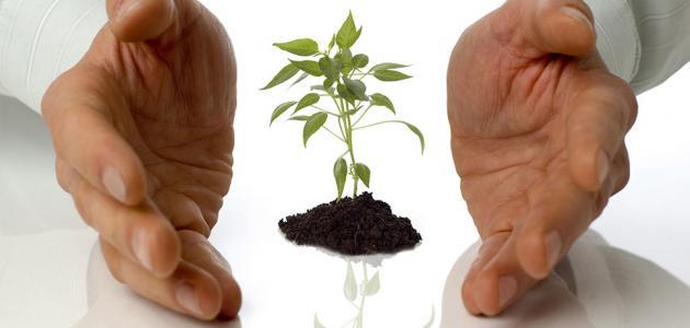 مفهوم النبات