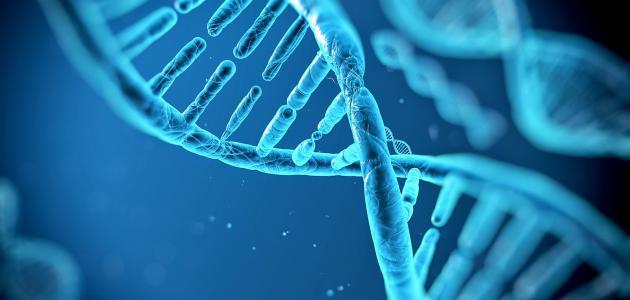 مفهوم البصمة الوراثية