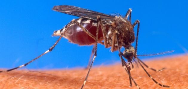 موضوع عن مرض الملاريا