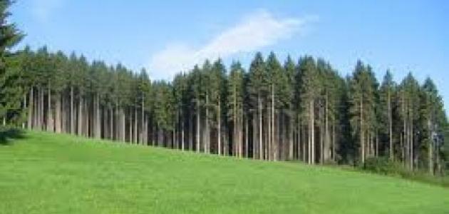 مشروع السد الأخضر