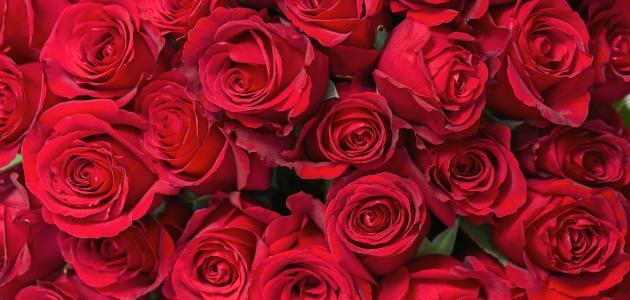 ما معنى ألوان الورود موضوع