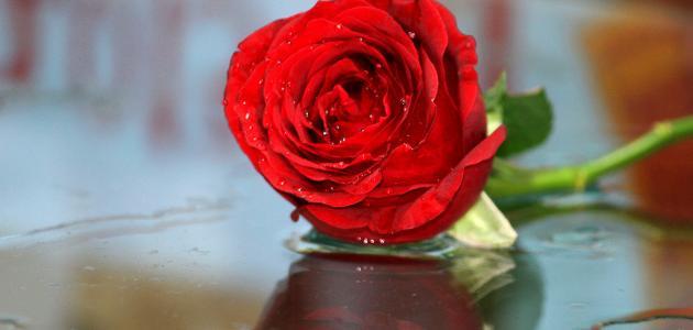 ما قصة عيد الحب