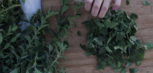 طريقة حفظ الزعتر الأخضر