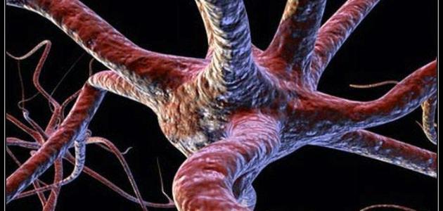 كم عدد خلايا الدماغ
