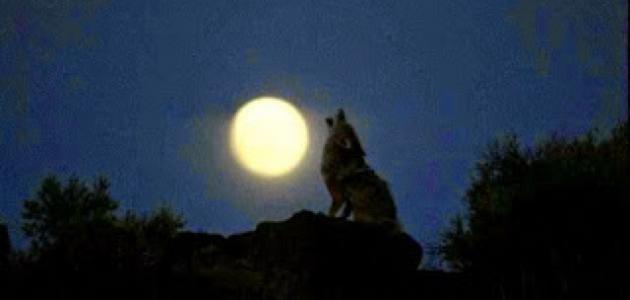 أسماء ضوء القمر