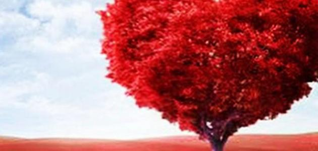 خواطر عن الحب قصيرة