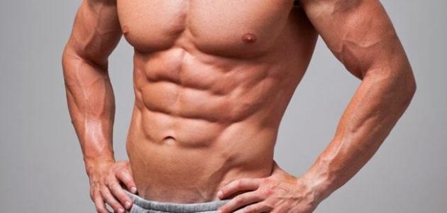 كم عدد عضلات البطن