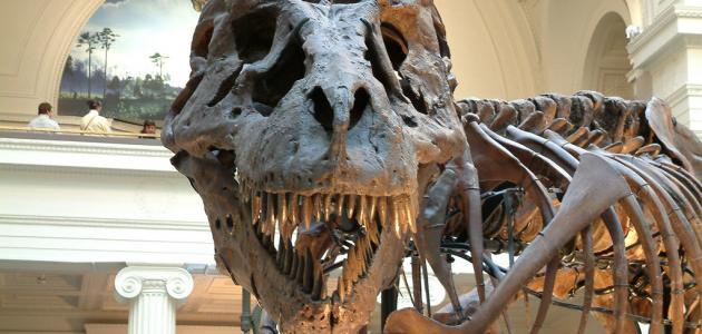 كيف انقرضت الديناصورات عن الأرض
