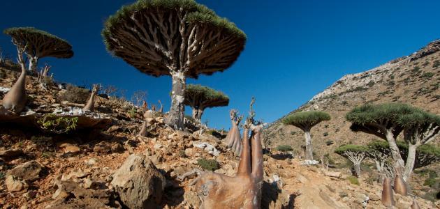 السياحة في جزيرة سقطرى