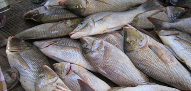 بحث عن الثروة السمكية في الوطن العربي