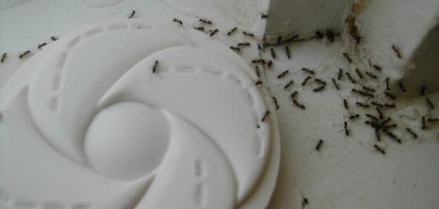 كيف يمكن التخلص من النمل