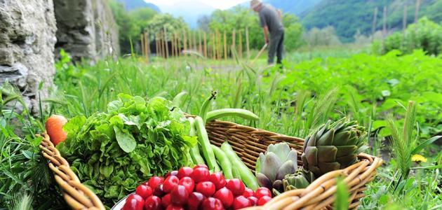 مفهوم التنمية الريفية