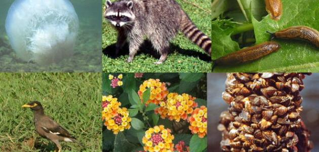 كيفية المحافظة على التنوع البيولوجي